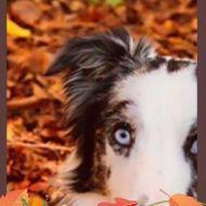 Lucky autunno