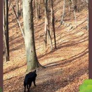 libertà nel bosco
