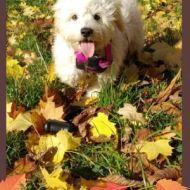 Nana e l'autunno
