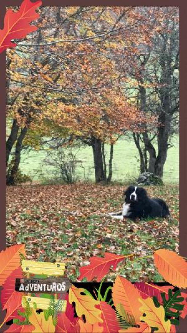 Wonder Autumn