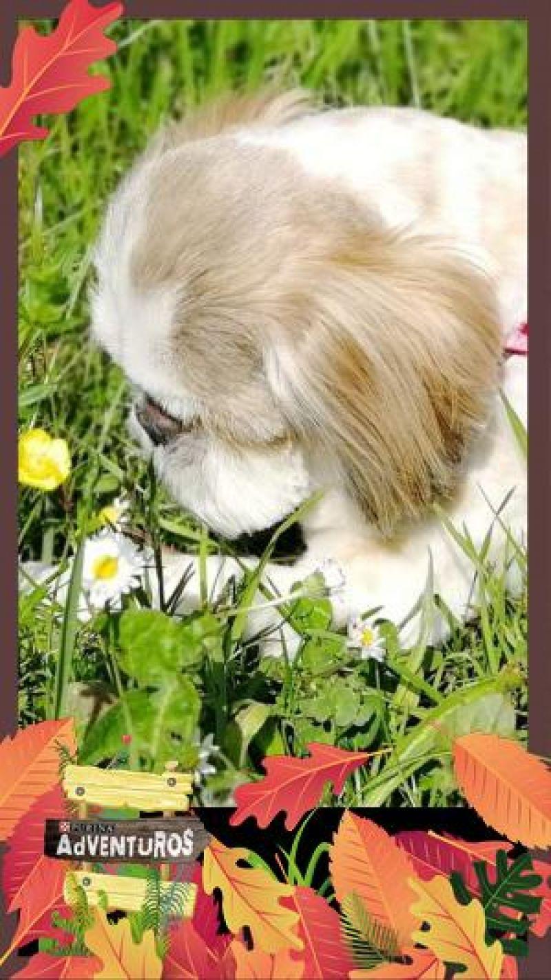 Ciak passione fiori