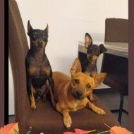 La tre-cani!!