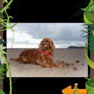 Autunno in spiaggia con Lea