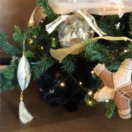 Nascondino sotto l'albero di Natale.