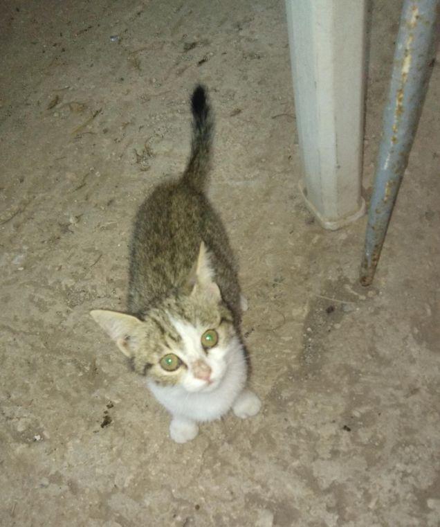 Cat Bianca