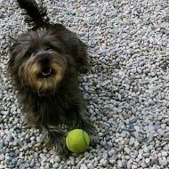Bella gioca a palla