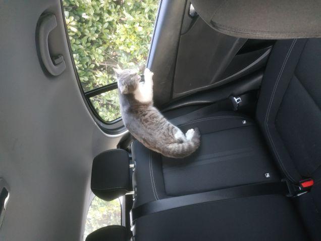 Prima volta in macchina