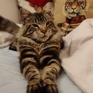 Sono una tigre!