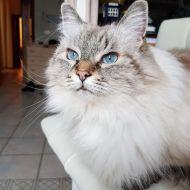 Lilly occhi azzurri