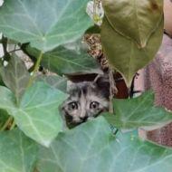 Lucy, giochiamo a nascondino