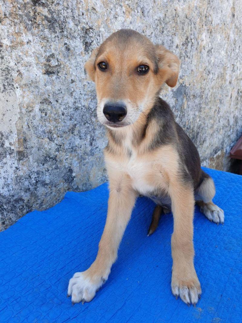 Sanji cucciolino di soli 3 mesi e mezzo