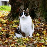 In autunno