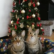 Cestino natalizio, che passione!