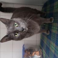 Loki cat of mischief