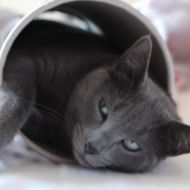 Gatto nel cilindro(Odino)