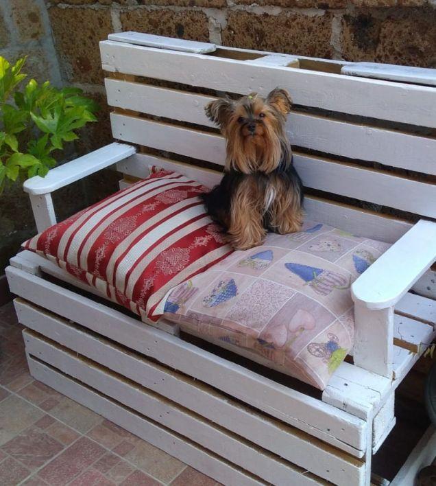 Molly in veranda