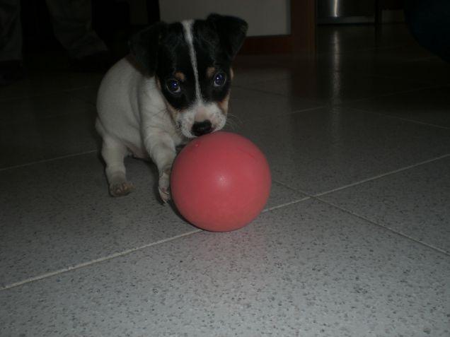 non sono io piccola,la pallina è grande