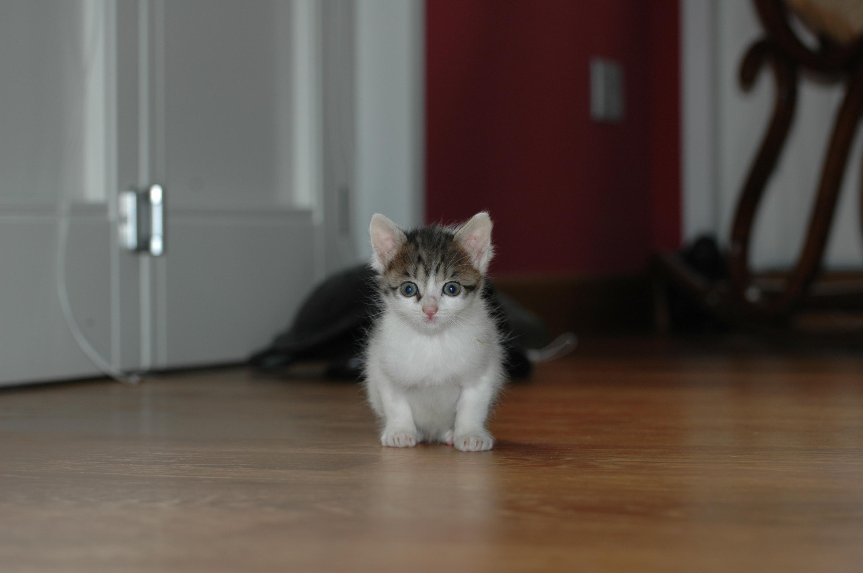 Regalo gattini buttati in pattumiera petpassion - Leroy merlin cheque regalo ...