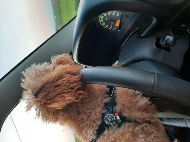 Rudy al volante