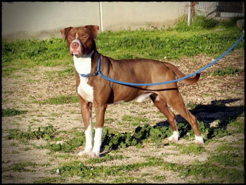Marshall, un cane fotomodello!