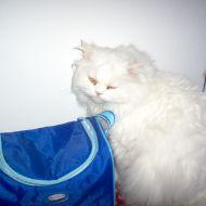 snuky il gatto bianco