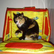 Ashi dentro la scatola dei giochi