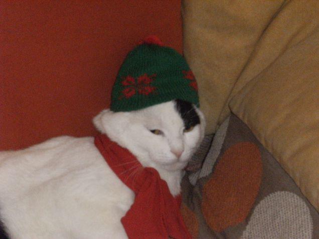 il gatto di Babbo Natale