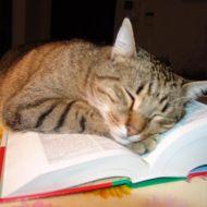 Zampa che studia