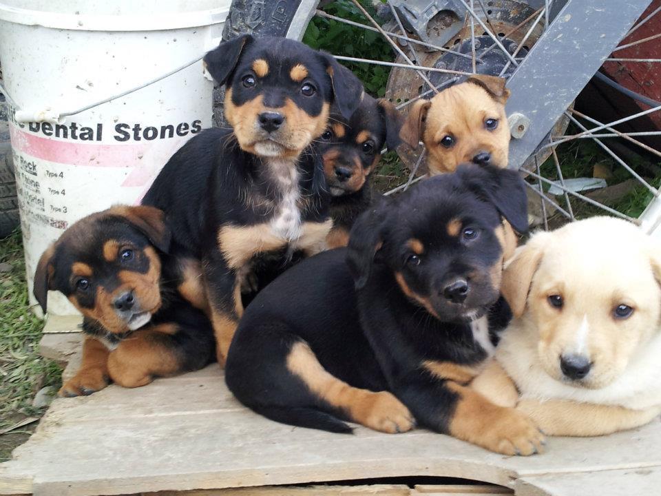 cuccioli taglia medio piccoli in cerca di adozioni ...