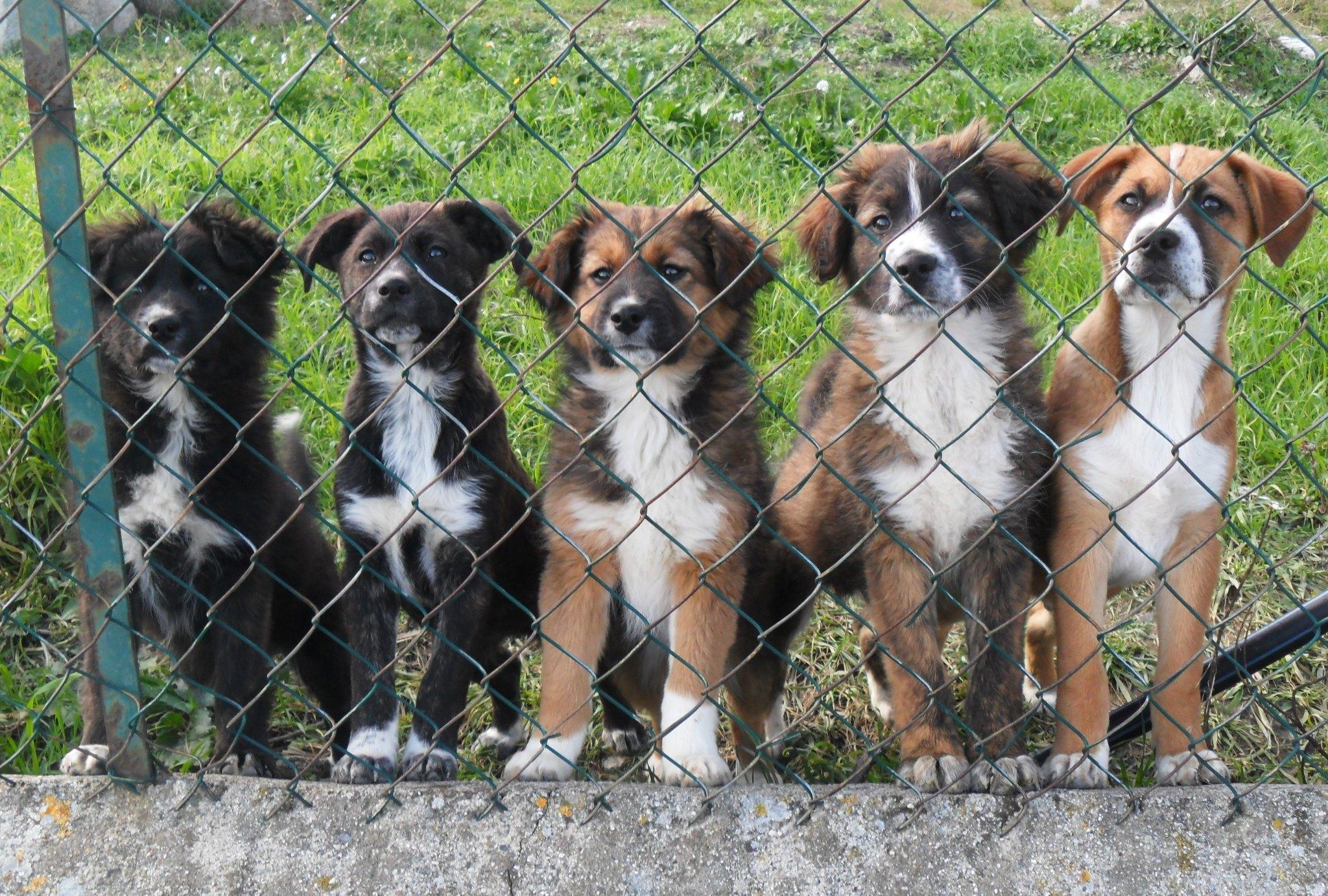 5 cuccioli cercano casa in tutta Italia  Petpassion