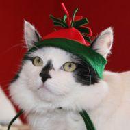 Macchia in abito natalizio