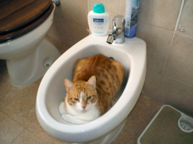 gatto pulito