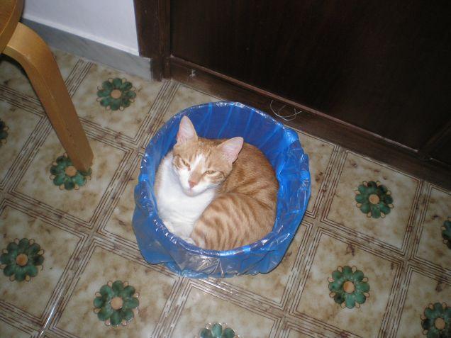 gatto da buttare?