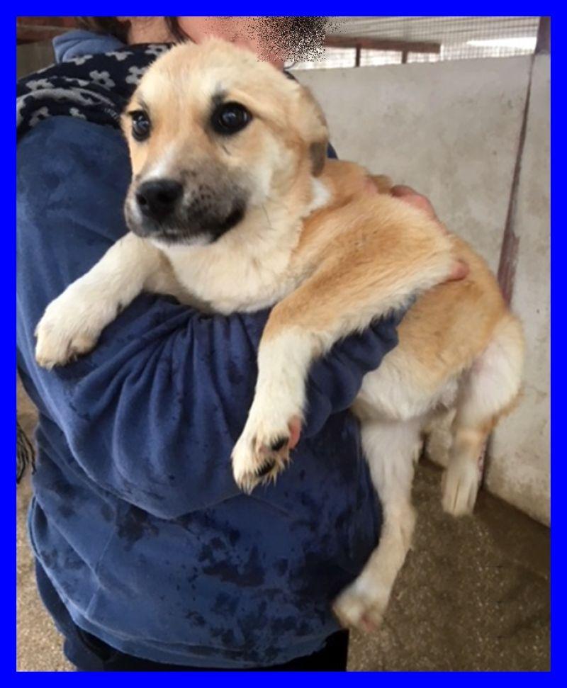 NANNARELLA cucciolotta 6 mesi catturata in strada