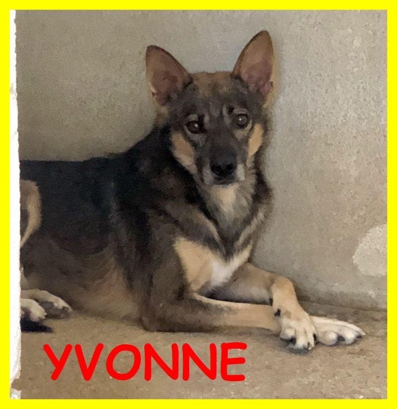 YVONNE 5 anni entrata in canile con il suo cucciolo e mai uscita