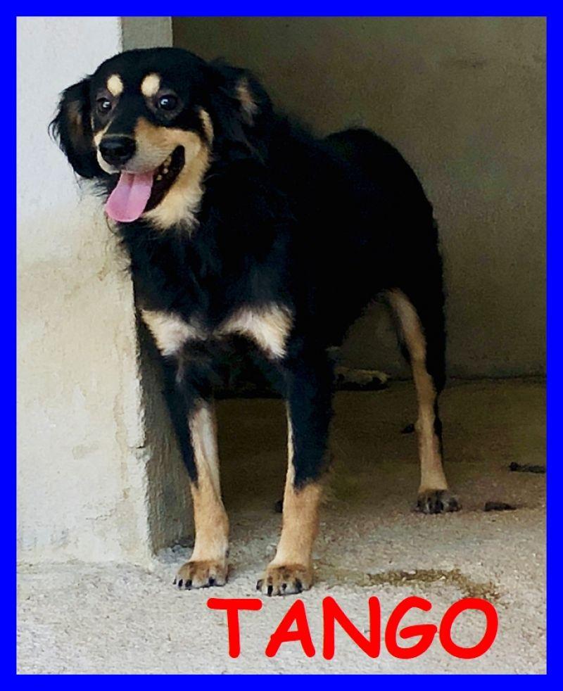 TANGO 2 anni nato in canile vuole solo conoscere il mondo