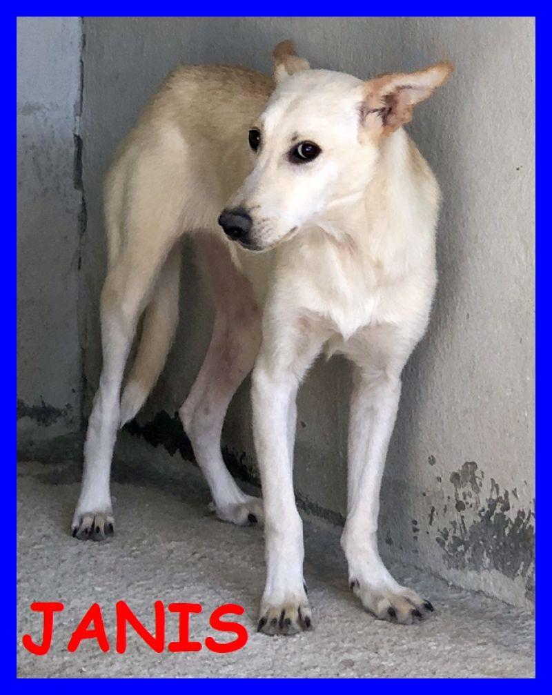 JANIS bella cucciolona 1 anno aspetta famiglia che la liberi