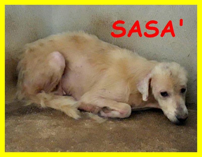 SASA' adozione urgente o aiuto simil labrador sofferente in un box