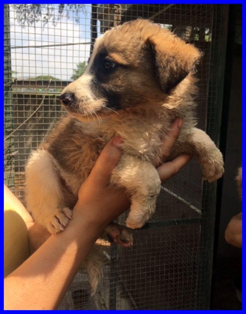 FREEDOM cucciolo 2 mesi e mezzo tenero peluche