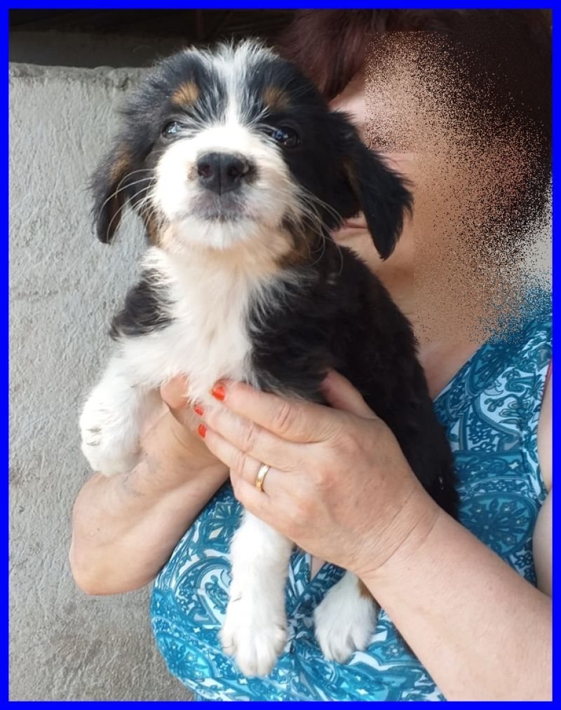MONTANA cucciolina 3 mesi e mezzo mollata in canile