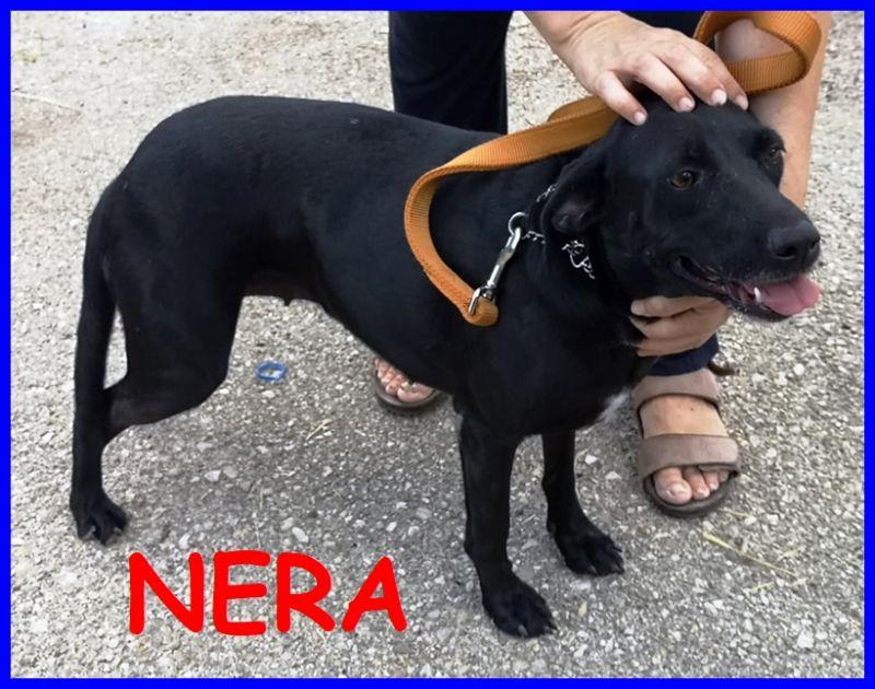 NERA simil labradorina 2 anni bella e buona
