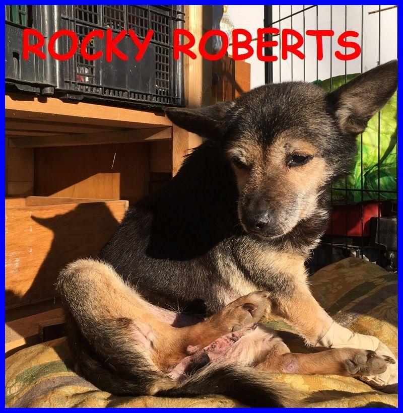 ROCKY ROBERTS mini nonnino 12 anni 6 kg pieno di voglia di vivere