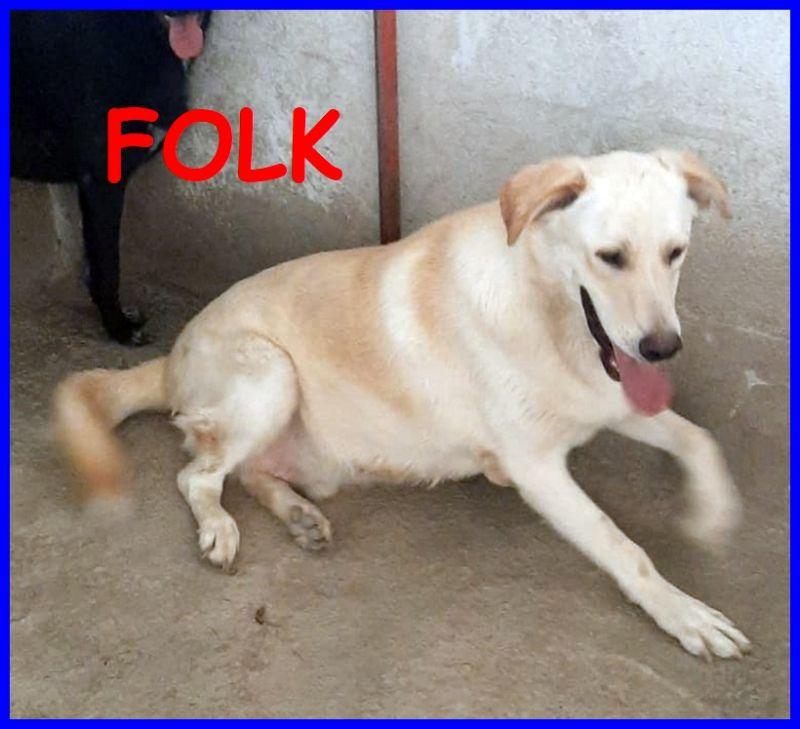 FOLK cucciolone 1 anno e mezzo simil labrador un dono per chi lo adotterà