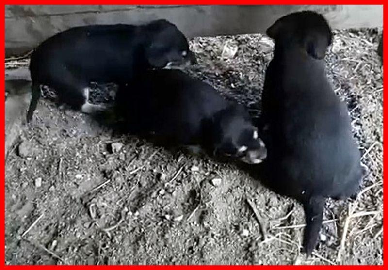 4 CUORICINI DA SALVARE mamma e 3 cuccioli in pericolo dentro un capannone